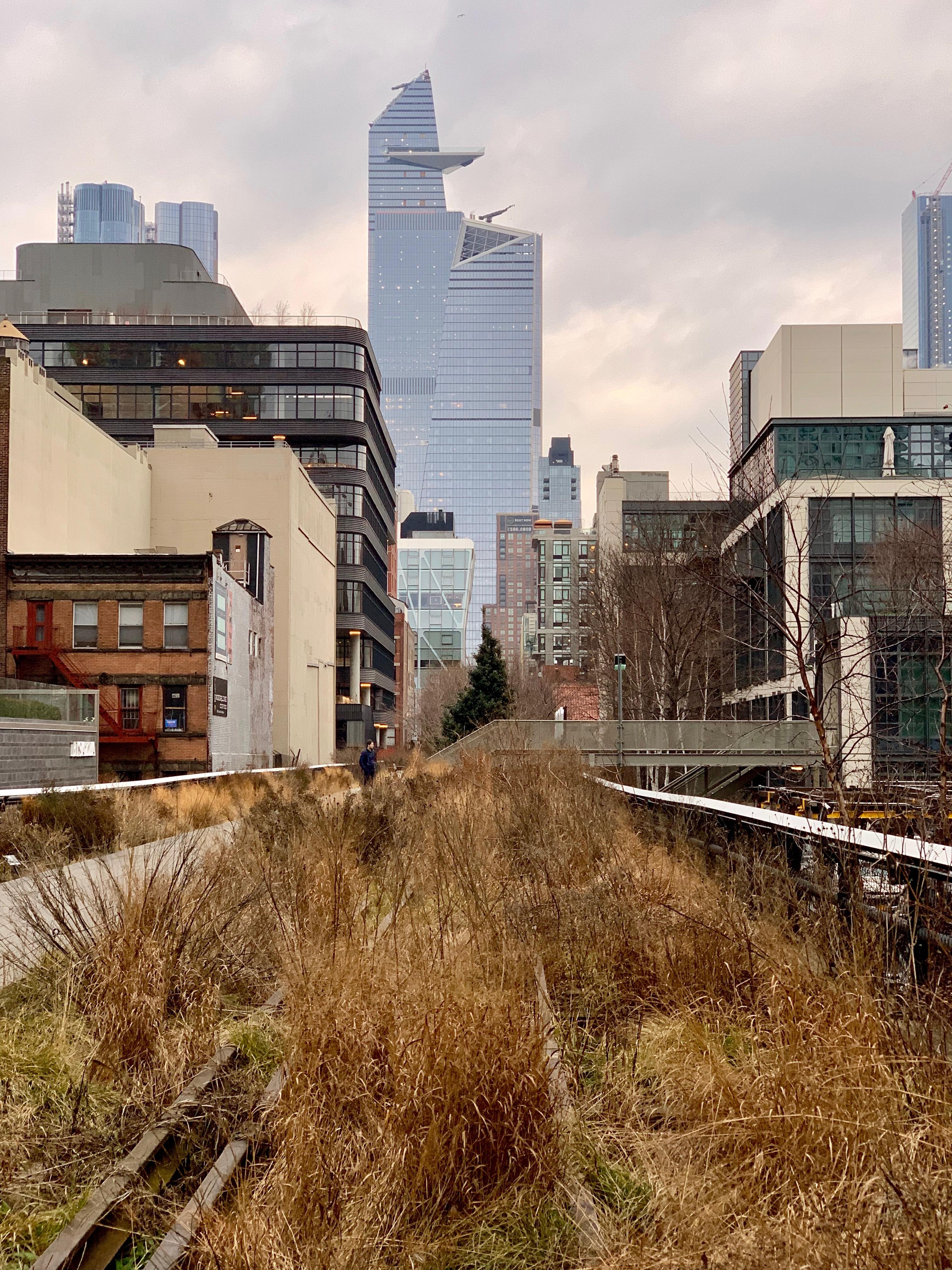 High Line Drought Tolerant Native Plant Species